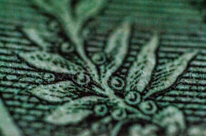 Berry Rich- Plant Detail Printed on a Dollar Bill