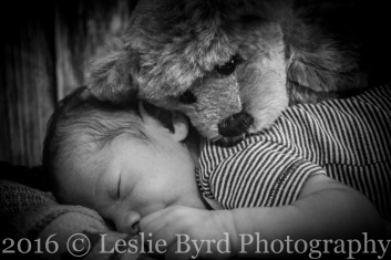 Teddy| Newborn Photography Portrait Session| Leslie Byrd Photography - Ellijay, GA