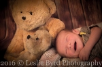 Teddy| Newborn Photography Portrait Session| Leslie Byrd Photography - Ellijay, GA