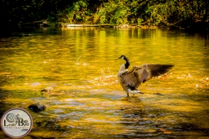 Nature Photography| Leslie Byrd Photography Ellijay GA