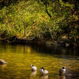 fall-flock-2