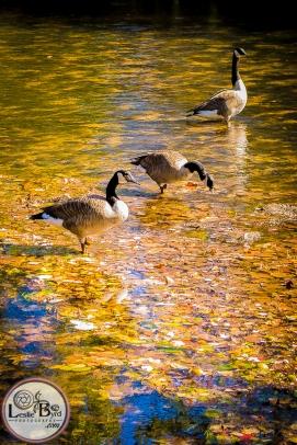 fall-flock-3