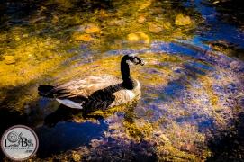 fall-flock-4