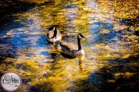 Nature Photography| Leslie Byrd Photography Ellijay GA