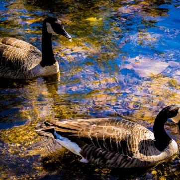 fall-flock-7