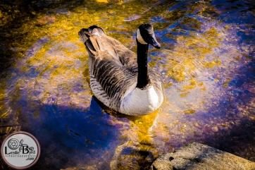 fall-flock-8