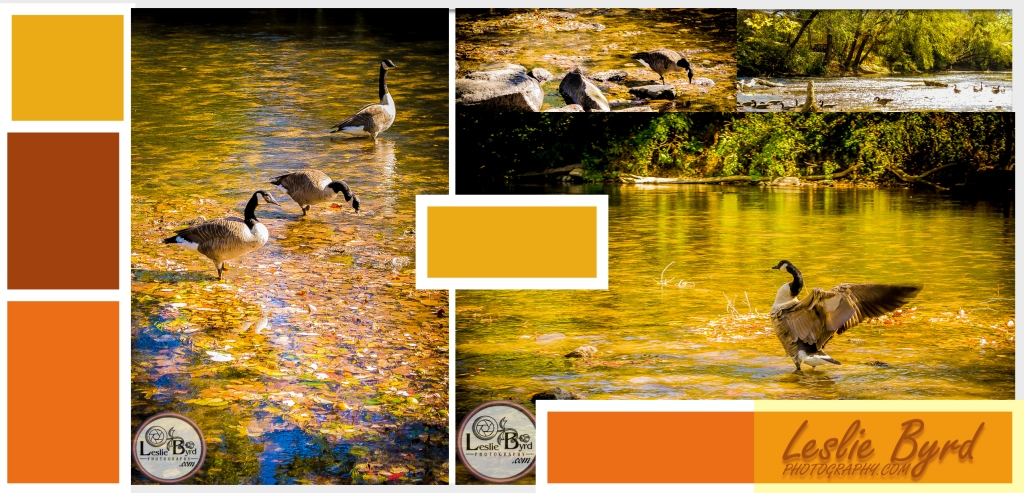Fall Flock-1| Nature Photography| Leslie Byrd Photography Ellijay GA
