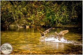 Fall Flock-146  Nature Photography  Leslie Byrd Photography Ellijay GA